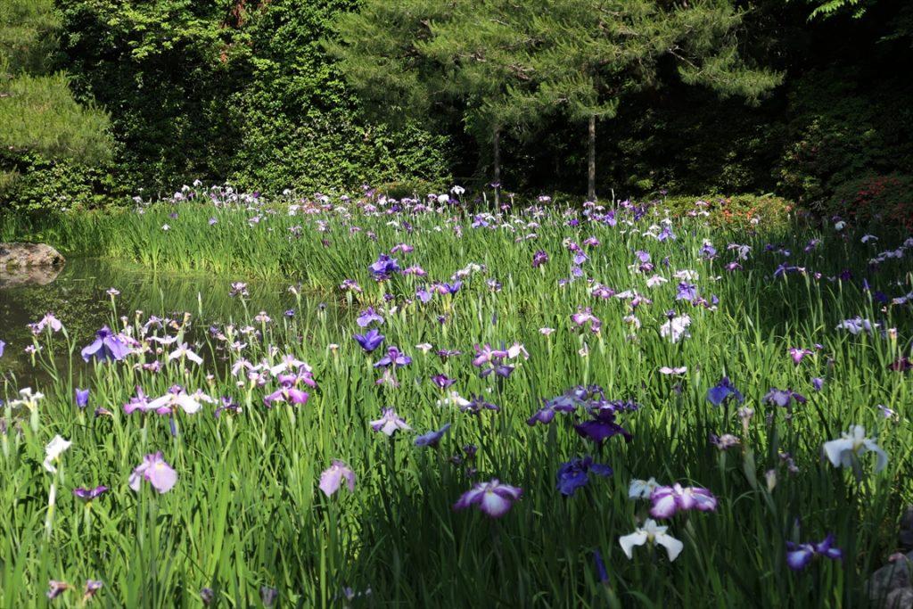平安神宮 お花