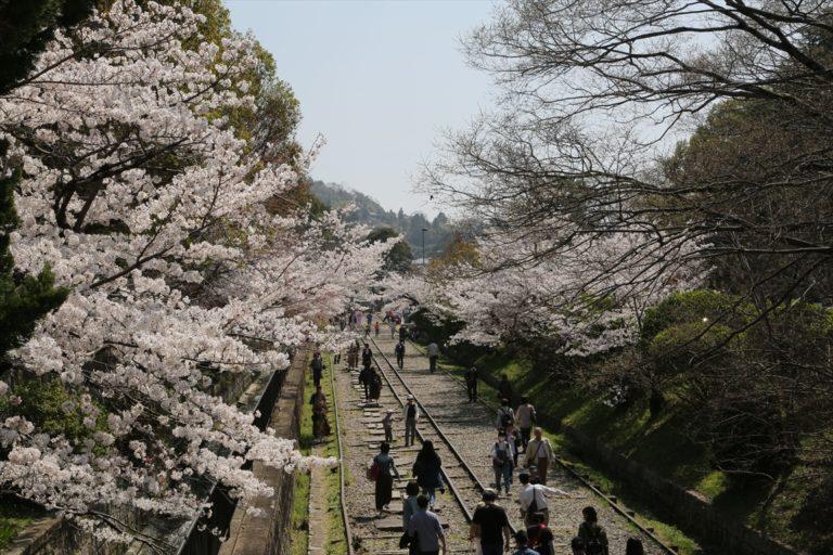 蹴上インクライン 桜