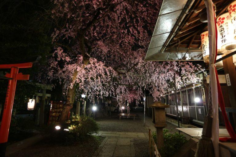 火水天満宮 桜