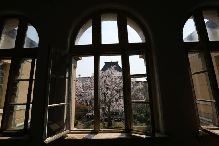京都府庁旧本館 桜