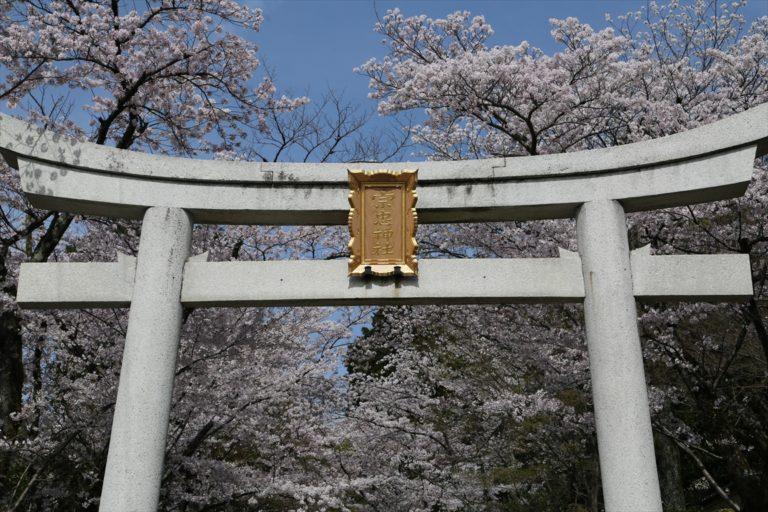 宗忠神社 桜