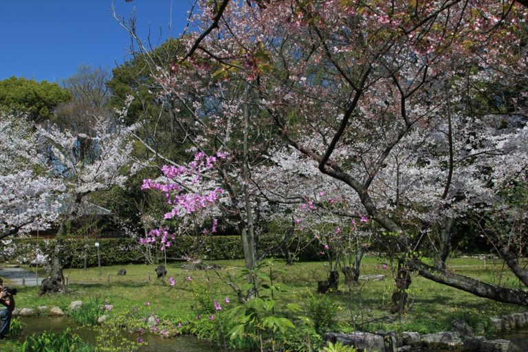 渉成園 桜